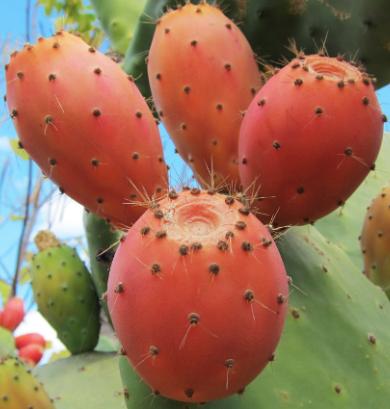 Inawera - Aroma Kaktus